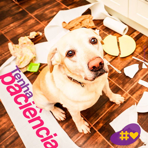 05 Post Pet Lovers - Cães - Imarketing